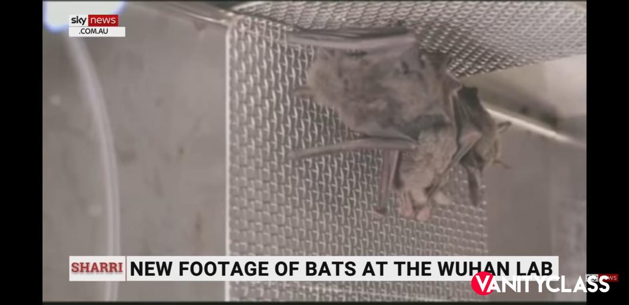 Wuhan, pipistrelli vivi in laboratorio. Un video riaccende il dibattito