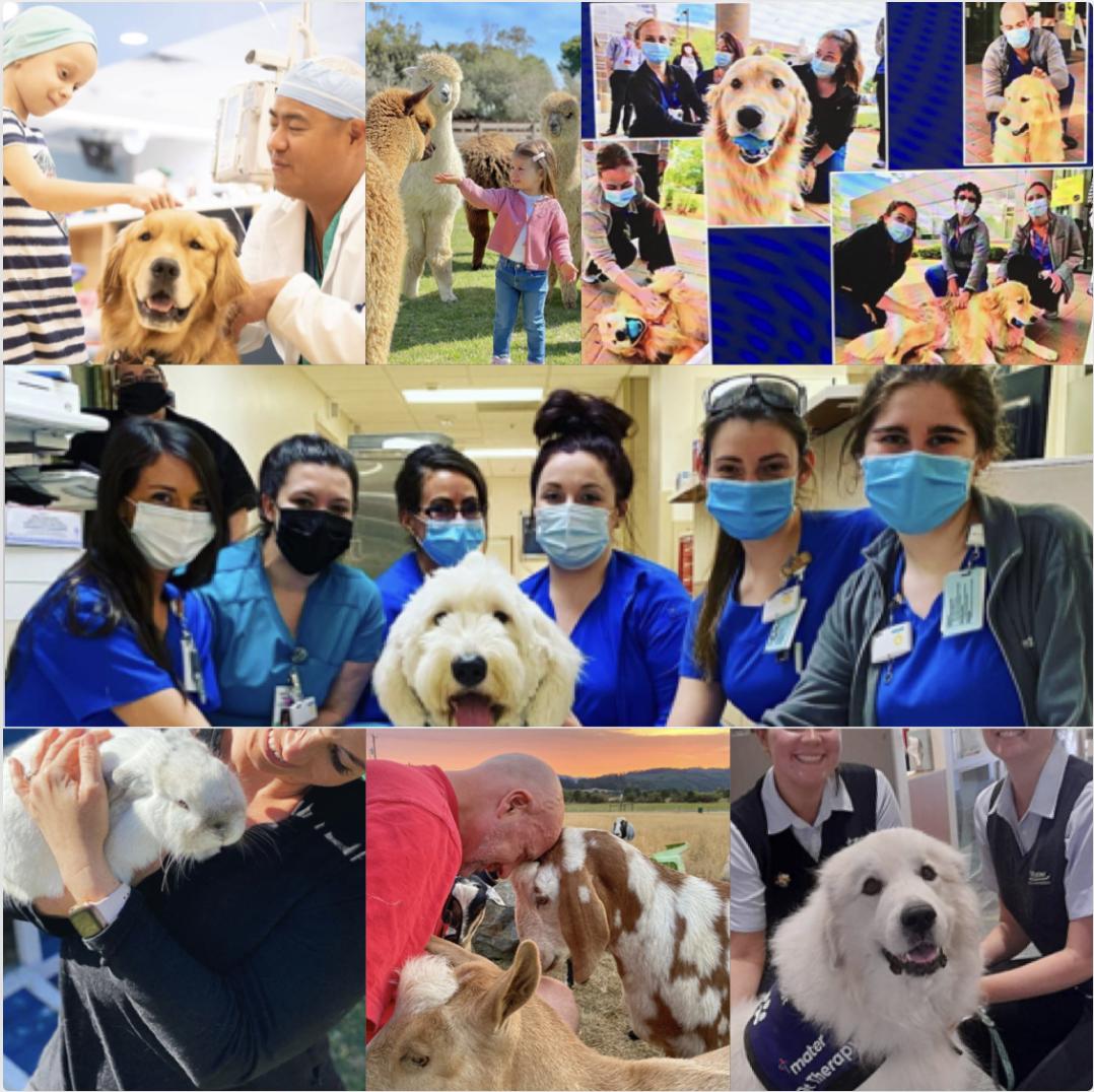 Come un cane può salvarti una vita