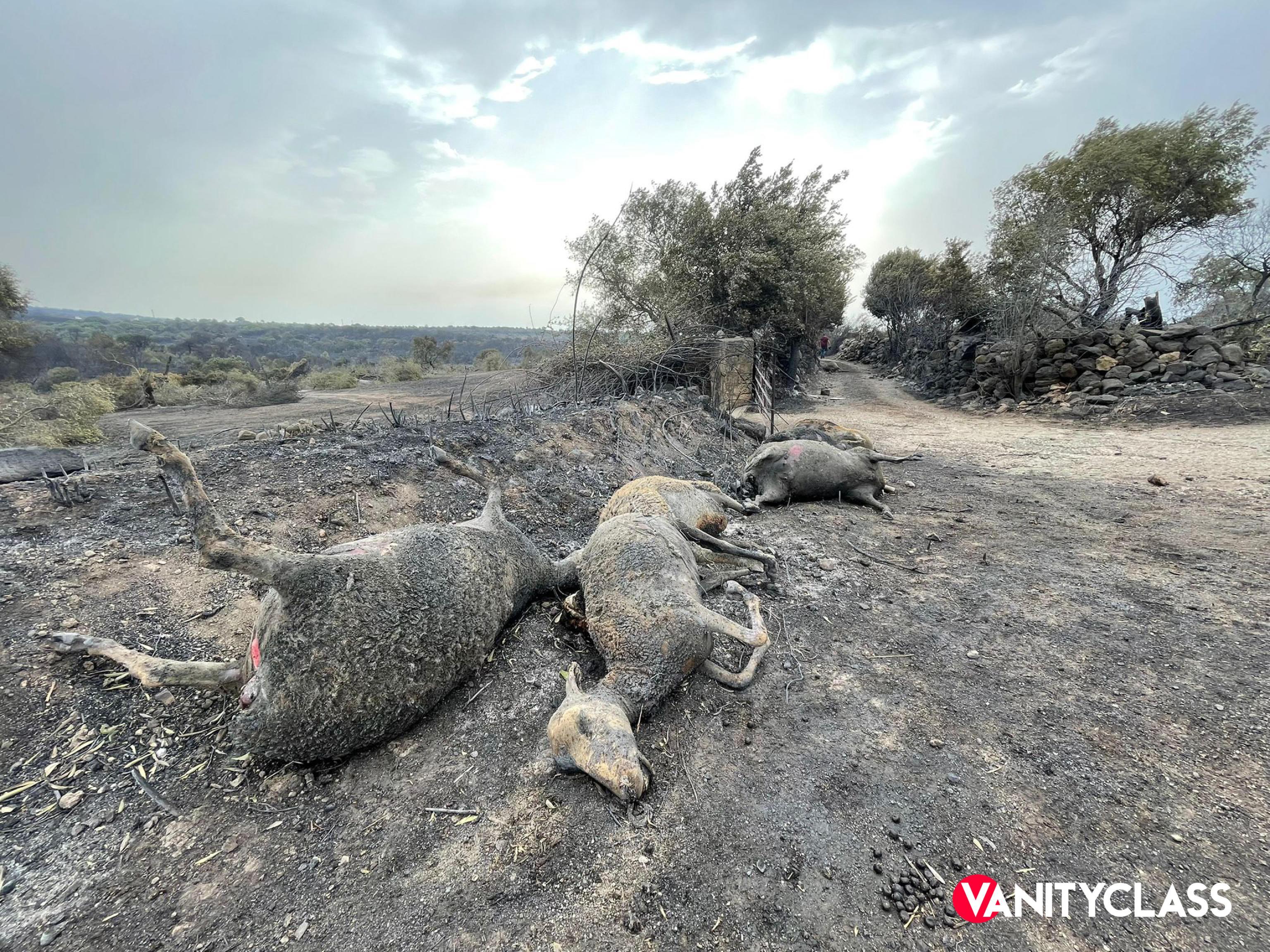Animali e incendi: la strage silenziosa
