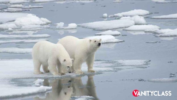Orsi polari e clima protagonisti al 78° Festival di Venezia